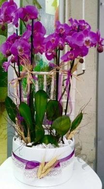 Seramik vazoda 4 dallı mor lila orkide  Bolu online çiçek gönderme sipariş