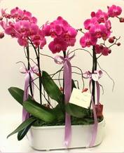 Beyaz seramik içerisinde 4 dallı orkide  Bolu ucuz çiçek gönder