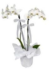 2 dallı beyaz orkide  Bolu güvenli kaliteli hızlı çiçek