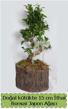 Doğal kütükte İthal bonsai japon ağacı  Bolu çiçek gönderme
