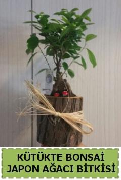 Kütük içerisinde doğal bonsai ağacı  Bolu çiçekçi telefonları