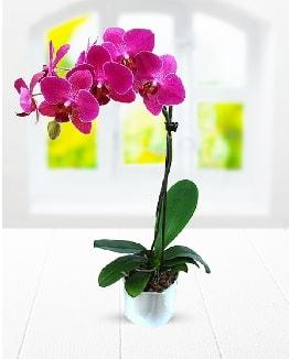 Tek dallı mor orkide  Bolu çiçek satışı