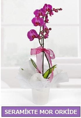 Seramik içerisinde birinci kalite tek dallı mor orkide  Bolu İnternetten çiçek siparişi
