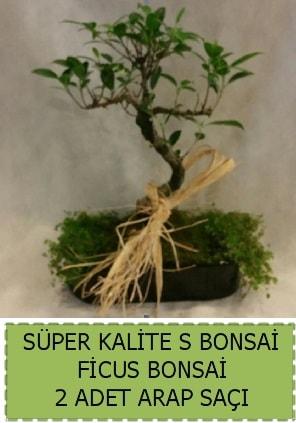 Ficus S Bonsai ve arap saçı  Bolu çiçekçi telefonları