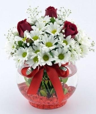 Fanusta 3 Gül ve Papatya  Bolu internetten çiçek satışı