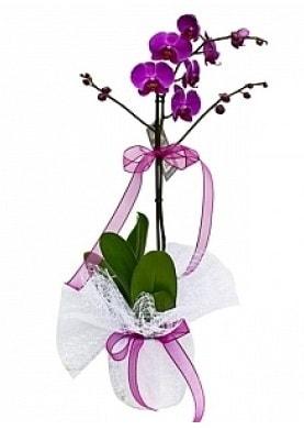 Tekli Mor Orkide  Bolu çiçek yolla