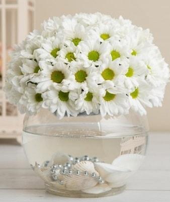 Fanusta beyaz Papatya  Bolu çiçek satışı