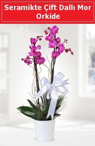 Seramikte Çift Dallı Mor Orkide  Bolu anneler günü çiçek yolla