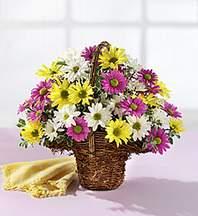 Bolu çiçekçiler  Mevsim çiçekleri sepeti
